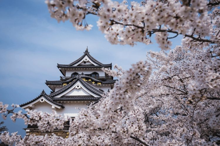 Cherry Blossom Season: Our Guide To Spring Travel In Japan pertaining to Travel To Japan Cherry Blossoms