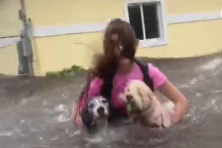 Dorian Slams Bahamas Forcing Woman With Dogs To Wade Chest-Hide Waters To  Get To Safety with regard to Traveling To Bahamas With Pets