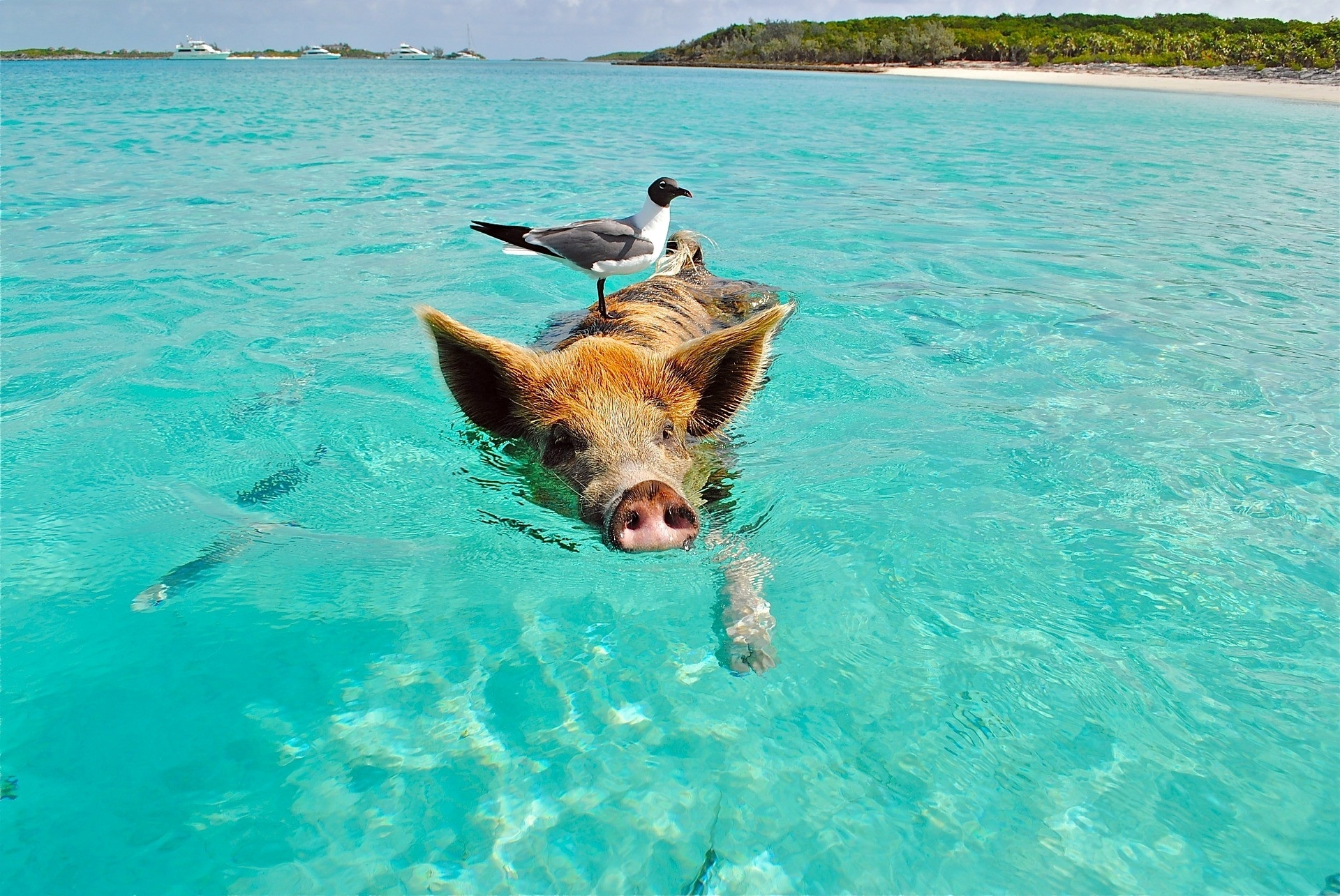 How To Take A Day Trip To The Bahamas From Miami - Wheres My with regard to Traveling To The Bahamas From Florida