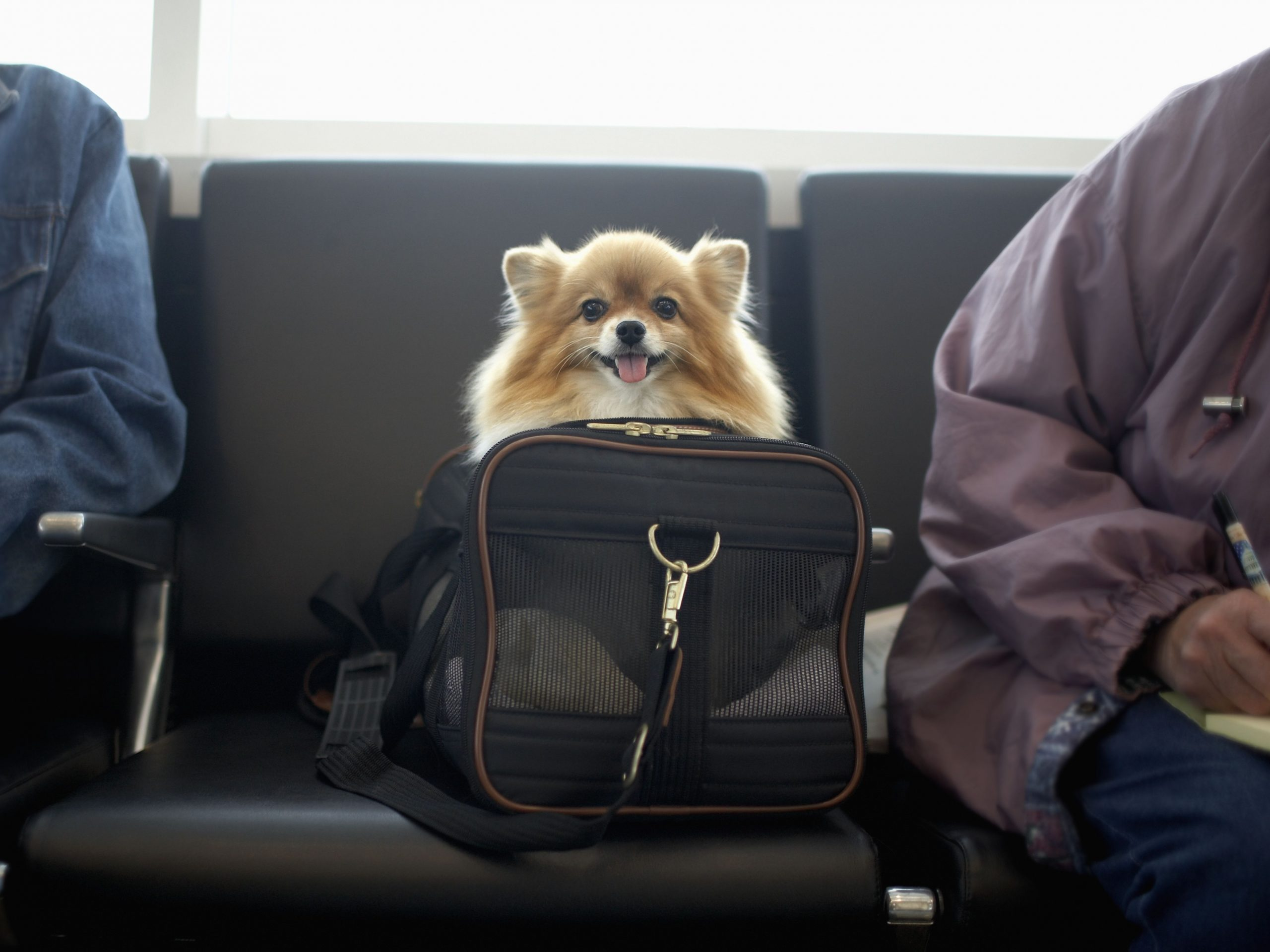 How To Travel To Denmark With A Dog regarding Traveling To Bahamas With Pets
