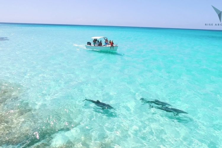 Swimming With Dolphins In Paradise | Spanish Wells/eleuthera, Bahamas in Traveling To Spanish Wells Bahamas
